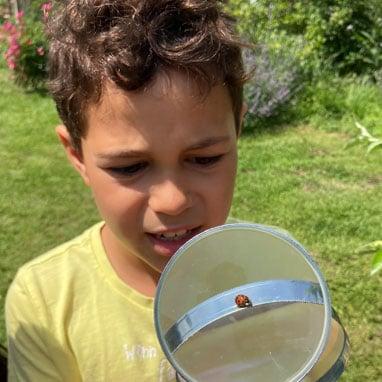 grade1 ladybug