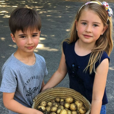 Primary students showing their potato harvest