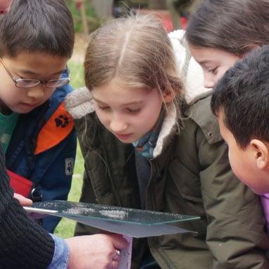 Primary students examining soil